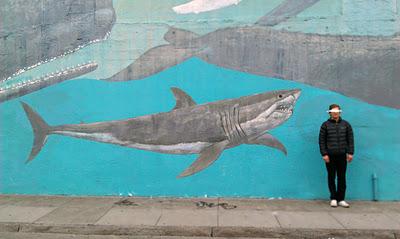 sharkyshark